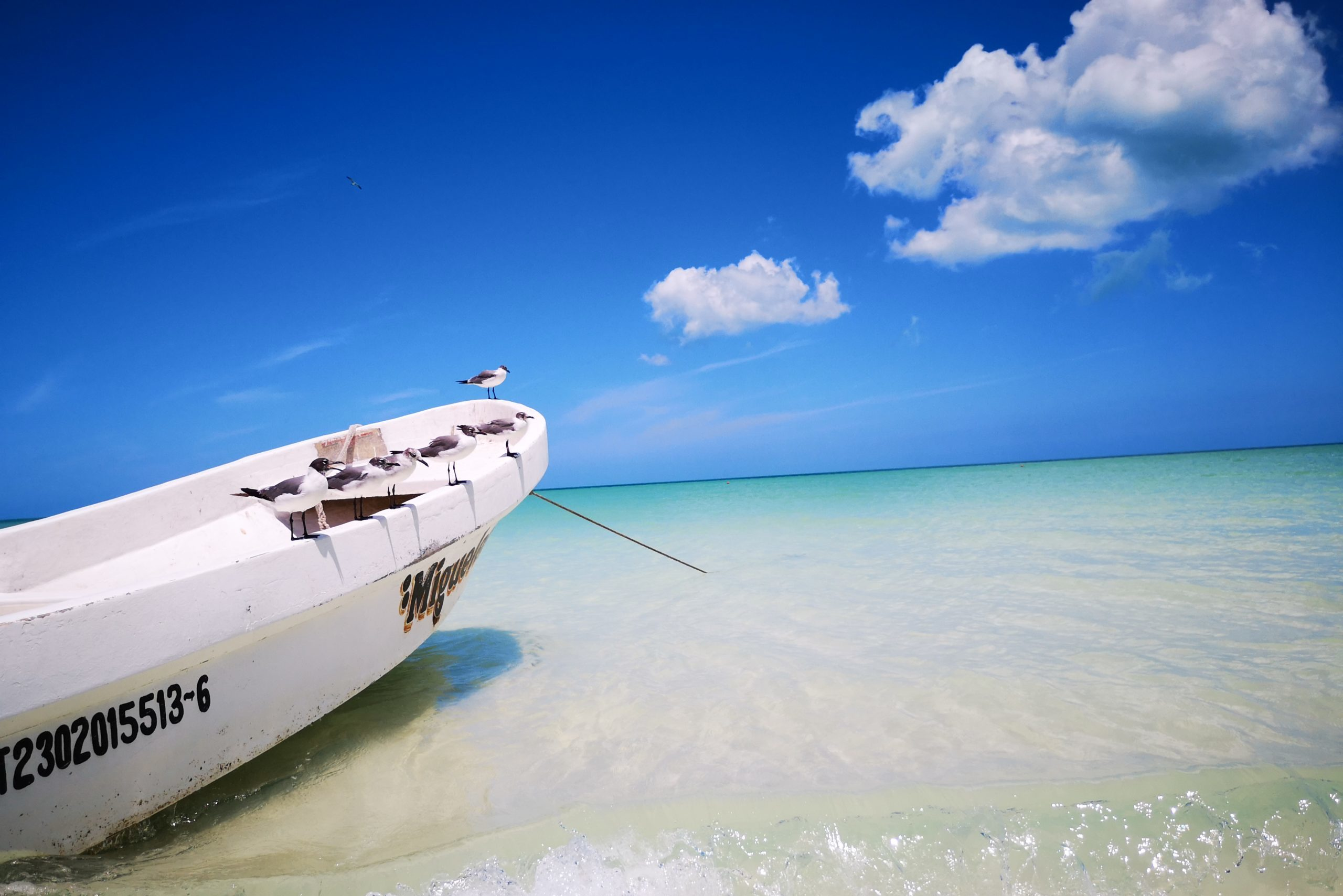 Fischerboot mit Möven am Strand der Isla Holbox in Mexiko