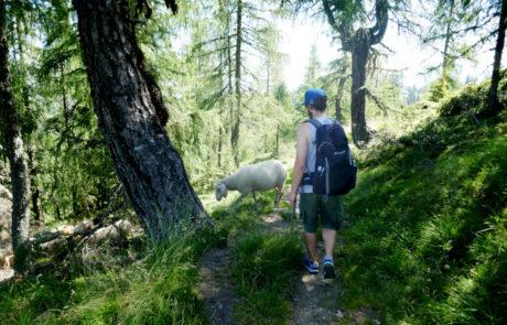 Hauser Kaibling Steiermark Österreich